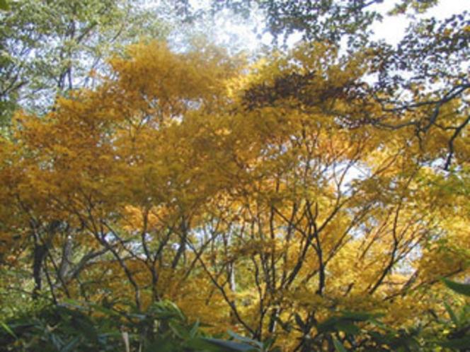 秋、山、紅葉-1