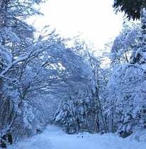 VHP 前道路 冬