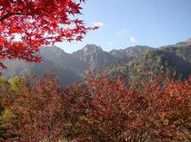 新穂高の秋