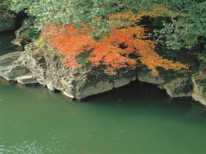 【周辺】ロビーからの眺め。対岸の原生林は新緑も紅葉も綺麗です。