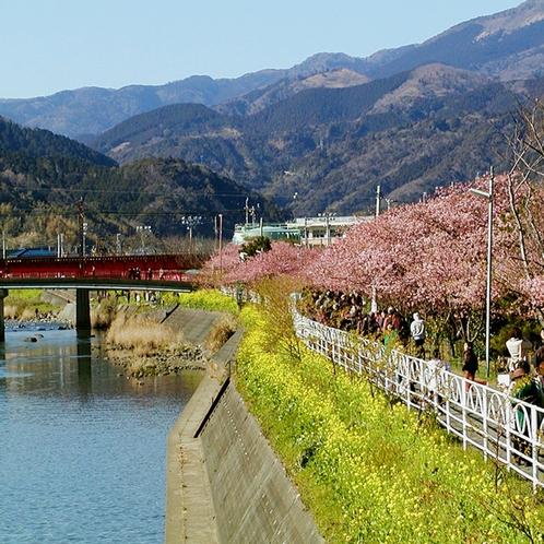 周辺_河津桜(1)