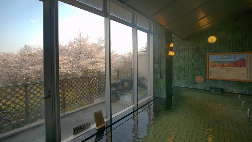 春の大浴場。庭園の桜を眺めながら温泉をご満喫ください。