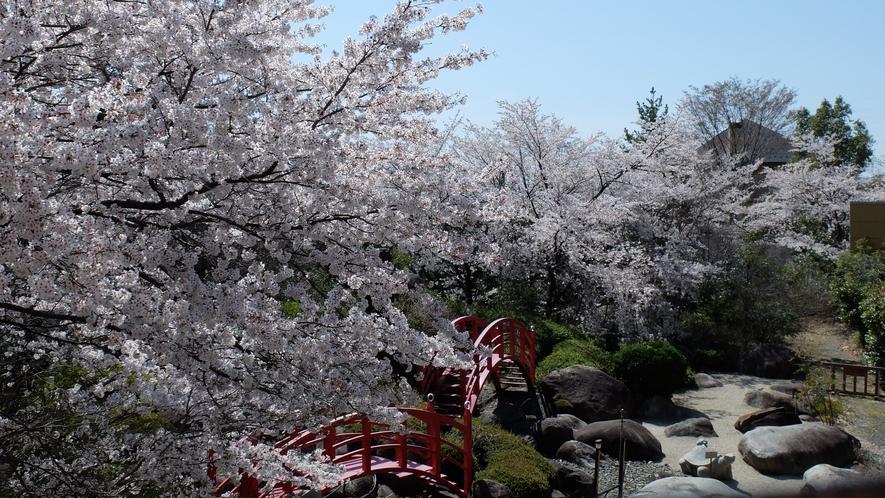春の庭園。満開の桜を、お風呂やテラスからお楽しみください♪