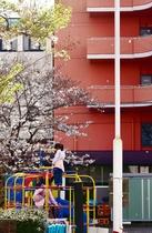 子供と桜と・・・・