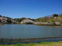 【蓮花寺池公園】 「花・水・鳥」がテーマの公園。4月には桜が5月には市の花・藤が咲き誇ります。