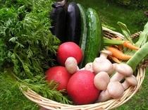 地物新鮮な野菜