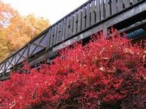 宿のドウダンツツジの紅葉