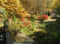 秋、庭の紅葉