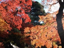紅葉の名所:瑞宝寺公園にて