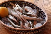 鮮魚 ワカサギ