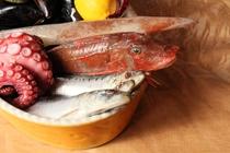 鮮魚 pesce
