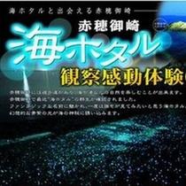 海ホタル鑑賞プラン