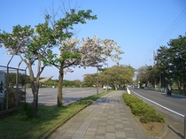 公園内 散歩コース
