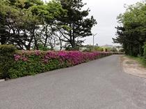 入口 坂道 ツツジ