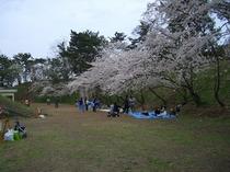 富津公園内 花見