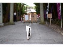 神明神社と猫