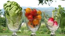 *【新鮮野菜一例】地元ならではの新鮮高原野菜、素材感を大切にしたお料理をご用意しております。