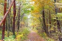 林の中の紅葉