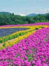 牧歌の里の花々