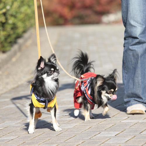 Dog image1