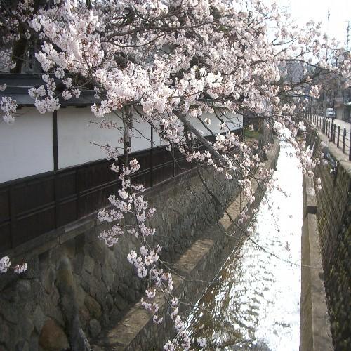 江名子川(春)