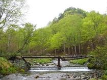 奥利根水源の森500*375