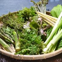 山の幸、各種山菜