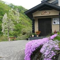 春には、たくさんの花々に囲まれます
