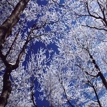 """☆氷の芸術""""樹氷""""☆"""