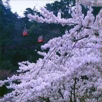 ☆桜とロープウェイ☆