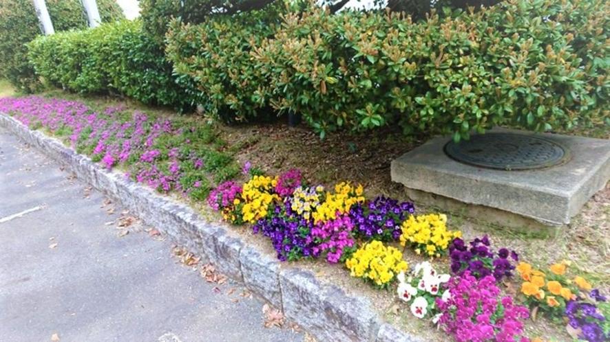 正面駐車場に咲く花々もお客様をお迎えいたします。