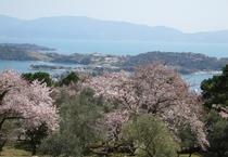 【展望台から見る景色】桜
