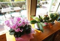 リビング窓際にはお気に入りの花たちを飾ってます♪