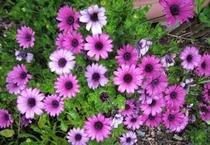 アラパパの前に夏前から咲くきれいな花です♪