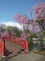 湯沢中央公園の春