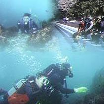 *ダイビングイメージ/どきどきの海中探検!綺麗なお魚をどのくらい見つけられるかなぁ♪