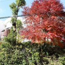 *外観/当館でも綺麗な紅葉を見ることができます。