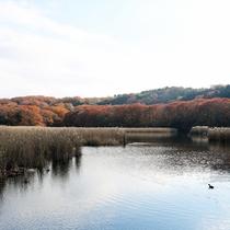 *一碧湖/素晴らしい景色をご覧いただけます。