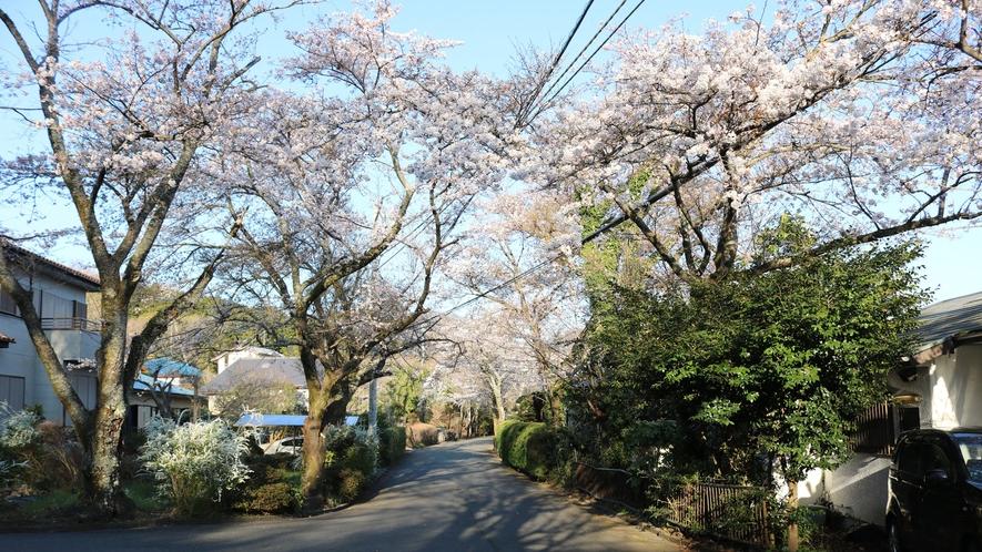 *ソメイヨシノ/当館周辺。春の訪れを感じます。