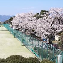 *小室山公園/テニスコートの横にも沢山の桜が咲いています♪
