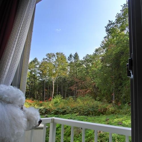 窓からの景色A