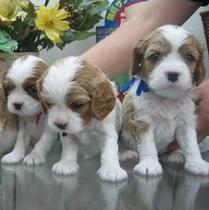 犬3匹 2