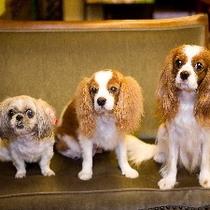 犬3匹 3