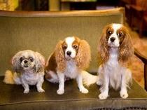 看板犬3匹