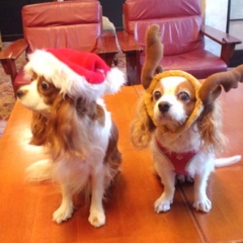 クリスマス犬です♪