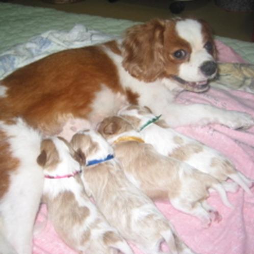 産まれたて4匹