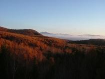 朝焼け、晩秋の唐松林