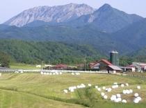 三木ヶ原牧場