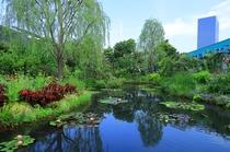 西武池袋屋上庭園「食と緑の空中庭園」睡蓮の庭