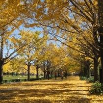 ホテルから徒歩15分 「国営昭和記念公園